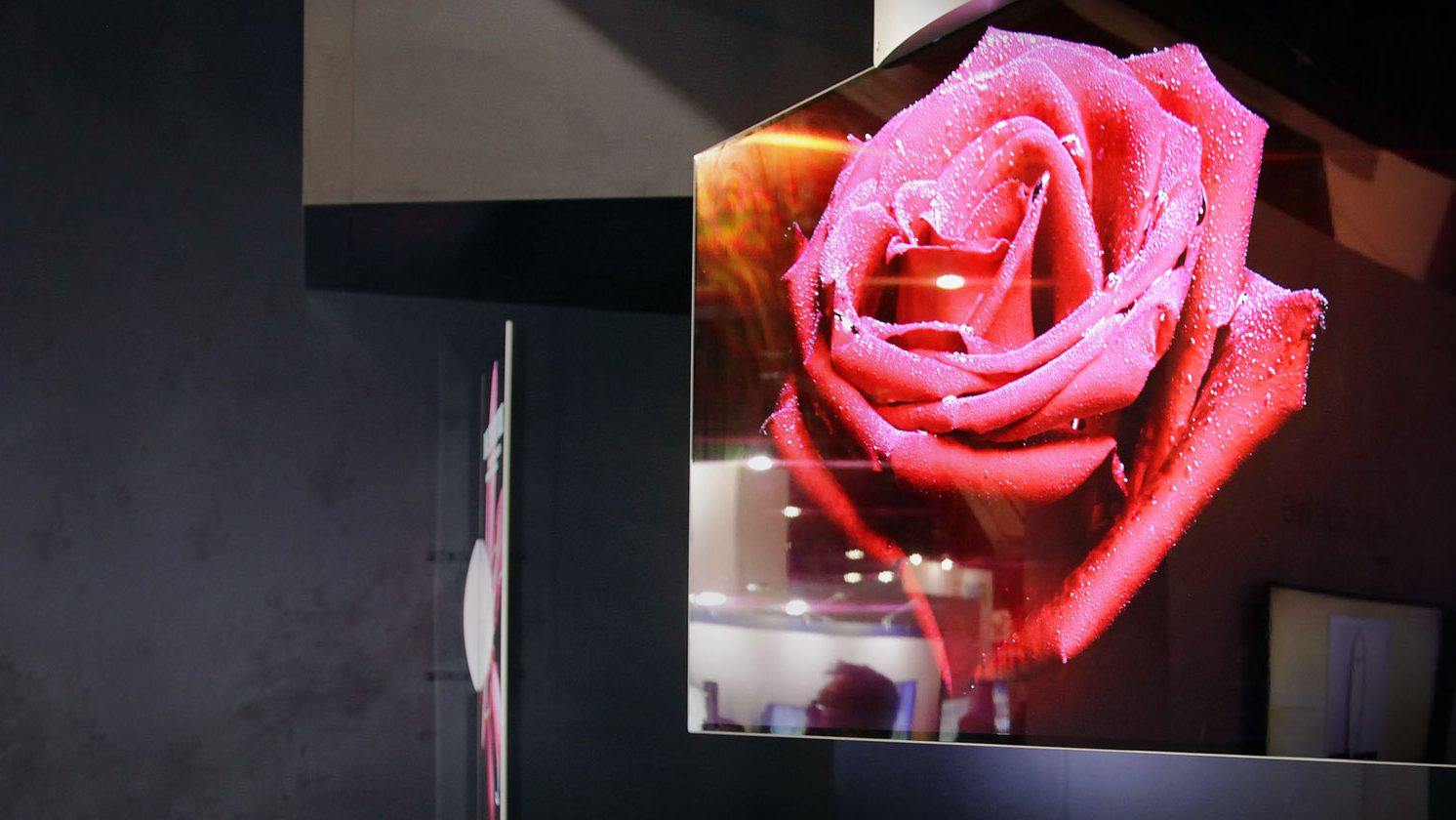 OLED display with a vibrant picture of a rose with morning dew on it